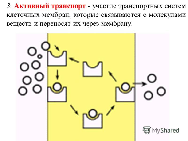 3. Активный транспорт - участие транспортных систем клеточных мембран, которые связываются с молекулами веществ и переносят их через мембрану.