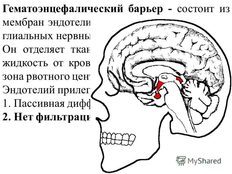 Гематоэнцефалический барьер - состоит из мембран эндотелия сосудов головного мозга и глиальных нервных клеток. Он отделяет ткань мозга и спинномозговую жидкость от крови (исключение - триггерная зона рвотного центра). Эндотелий прилегает ПЛОТНО - 1.