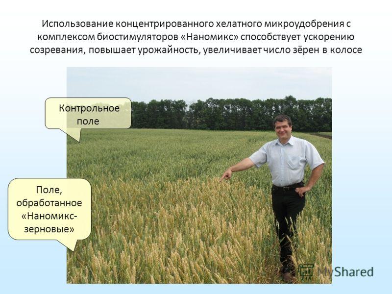 Использование концентрированного хелатного микроудобрения с комплексом биостимуляторов «Наномикс» способствует ускорению созревания, повышает урожайность, увеличивает число зёрен в колосе Контрольное поле Поле, обработанное «Наномикс- зерновые»