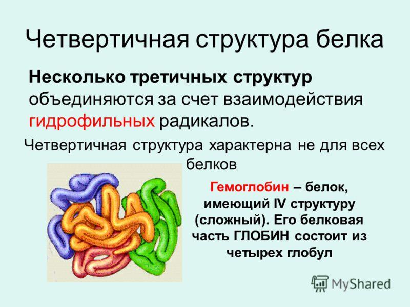 Четвертичная структура белка Несколько третичных структур объединяются за счет взаимодействия гидрофильных радикалов. Четвертичная структура характерна не для всех белков Гемоглобин – белок, имеющий IV структуру (сложный). Его белковая часть ГЛОБИН с