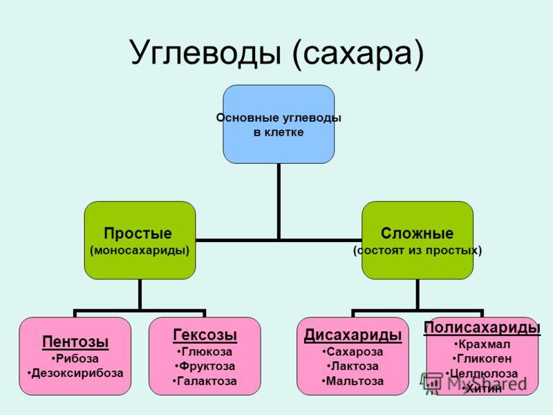 Углеводы (сахара) Основные углеводы в клетке Простые (моносахариды) Пентозы Рибоза Дезоксирибоза Гексозы Глюкоза Фруктоза Галактоза Сложные (состоят из простых) Дисахариды Сахароза Лактоза Мальтоза Полисахариды Крахмал Гликоген Целлюлоза Хитин