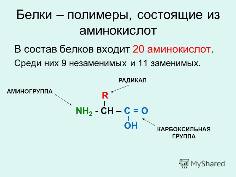 Белки – полимеры, состоящие из аминокислот В состав белков входит 20 аминокислот. Среди них 9 незаменимых и 11 заменимых. NH 2 - CH – C = O I OH I R АМИНОГРУППА КАРБОКСИЛЬНАЯ ГРУППА РАДИКАЛ