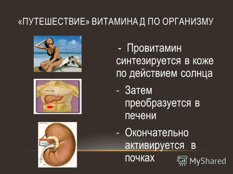 «ПУТЕШЕСТВИЕ» ВИТАМИНА Д ПО ОРГАНИЗМУ - Провитамин синтезируется в коже по действием солнца -Затем преобразуется в печени -Окончательно активируется в почках