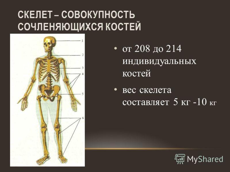 СКЕЛЕТ – СОВОКУПНОСТЬ СОЧЛЕНЯЮЩИХСЯ КОСТЕЙ от 208 до 214 индивидуальных костей вес скелета составляет 5 кг -10 кг