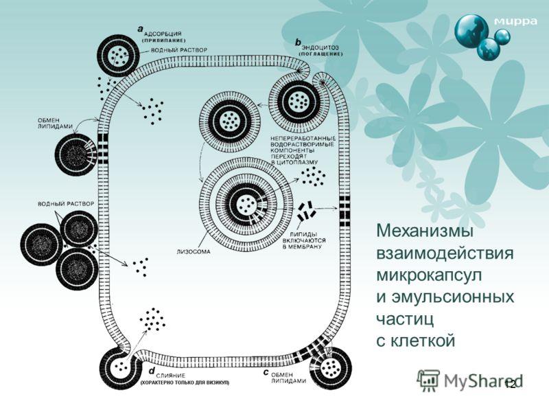 12 Механизмы взаимодействия микрокапсул и эмульсионных частиц с клеткой