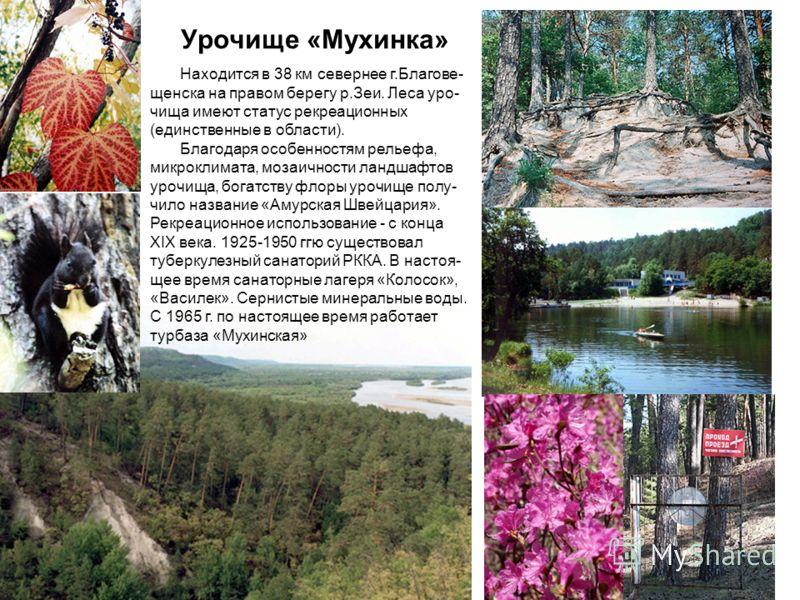 Урочище «Мухинка» Находится в 38 км севернее г.Благове- щенска на правом берегу р.Зеи. Леса уро- чища имеют статус рекреационных (единственные в области). Благодаря особенностям рельефа, микроклимата, мозаичности ландшафтов урочища, богатству флоры у