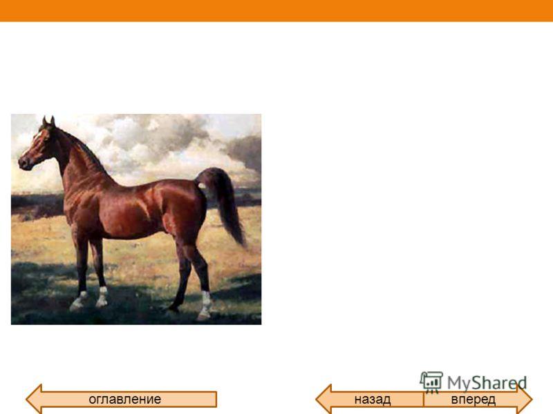 Лошади единственный современный род семейства лошадиных отряда непарнокопытных. оглавлениевпередназад