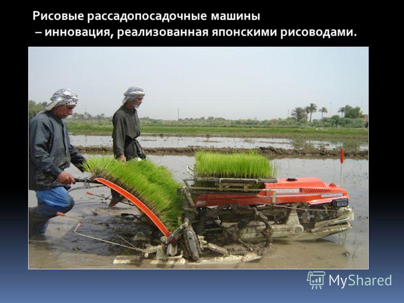 Рисовые рассадопосадочные машины – инновация, реализованная японскими рисоводами.