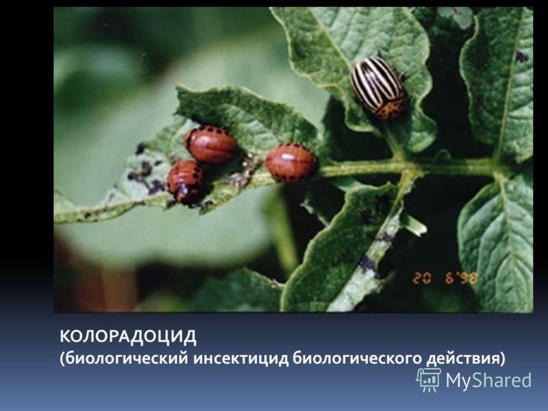КОЛОРАДОЦИД (биологический инсектицид биологического действия)