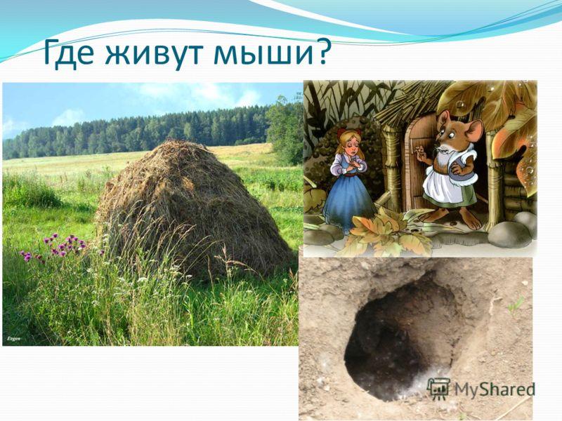 Где живут мыши?
