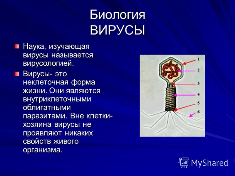 Биология ВИРУСЫ Наука, изучающая вирусы называется вирусологией. Вирусы- это неклеточная форма жизни. Они являются внутриклеточными облигатными паразитами. Вне клетки- хозяина вирусы не проявляют никаких свойств живого организма.