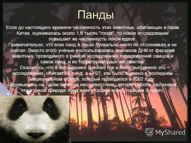 Панды Если до настоящего времени численность этих животных, обитающих в горах Китая, оценивалась около 1,6 тысяч