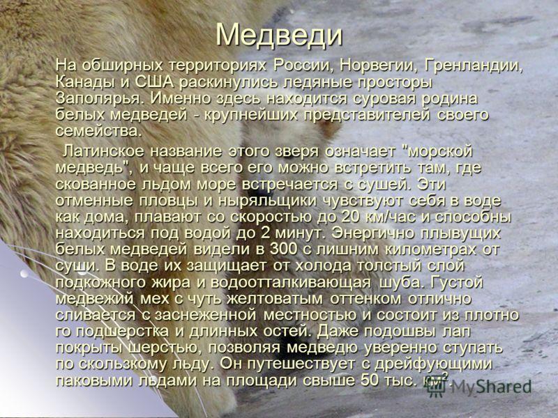 Медведи На обширных территориях России, Норвегии, Гренландии, Канады и США раскинулись ледяные просторы Заполярья. Именно здесь находится суровая родина белых медведей - крупнейших представителей своего семейства. На обширных территориях России, Норв