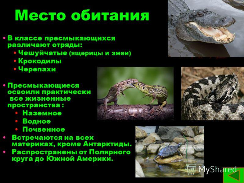 Место обитания В классе пресмыкающихся различают отряды: Чешуйчатые (ящерицы и змеи) Крокодилы Черепахи Пресмыкающиеся освоили практически все жизненные пространства : Наземное Водное Почвенное Встречаются на всех материках, кроме Антарктиды. Распрос