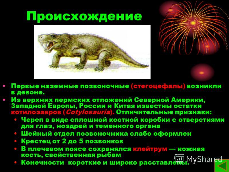 Происхождение Первые наземные позвоночные (стегоцефалы) возникли в девоне. Из верхних пермских отложений Северной Америки, Западной Европы, России и Китая известны остатки котилозавров (Cotylosauria). Отличительные признаки: Череп в виде сплошной кос