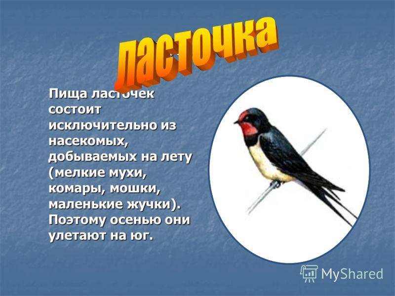 ласточка Пища ласточек состоит исключительно из насекомых, добываемых на лету (мелкие мухи, комары, мошки, маленькие жучки). Поэтому осенью они улетают на юг. Пища ласточек состоит исключительно из насекомых, добываемых на лету (мелкие мухи, комары,