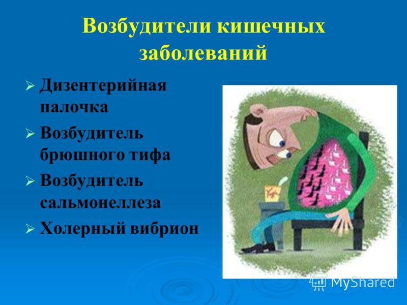 Возбудители кишечных заболеваний Дизентерийная палочка Возбудитель брюшного тифа Возбудитель сальмонеллеза Холерный вибрион