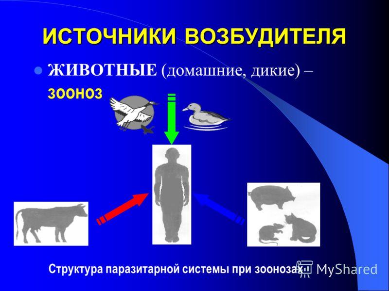 ИСТОЧНИКИ ВОЗБУДИТЕЛЯ ЖИВОТНЫЕ (домашние, дикие) – зооноз Структура паразитарной системы при зоонозах