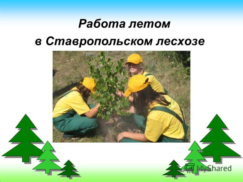 Работа летом в Ставропольском лесхозе
