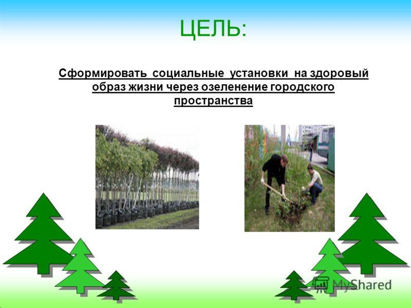 ЦЕЛЬ: Сформировать социальные установки на здоровый образ жизни через озеленение городского пространства