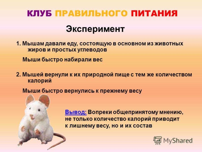 Эксперимент 1. Мышам давали еду, состоящую в основном из животных жиров и простых углеводов Мыши быстро набирали вес 2. Мышей вернули к их природной пище с тем же количеством калорий Мыши быстро вернулись к прежнему весу Вывод: Вопреки общепринятому