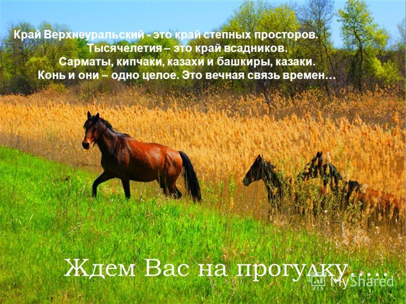 Край Верхнеуральский - это край степных просторов. Тысячелетия – это край всадников. Сарматы, кипчаки, казахи и башкиры, казаки. Конь и они – одно целое. Это вечная связь времен… Ждем Вас на прогулку…..