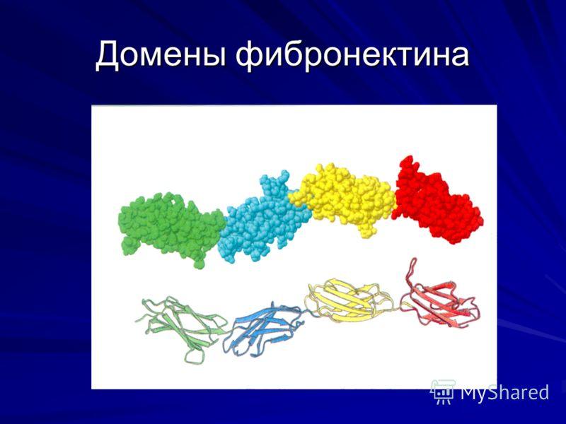 Домены фибронектина