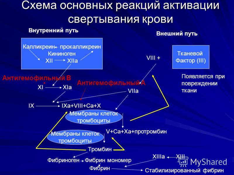 Схема основных реакций активации свертывания крови Калликреин прокалликреин Кининоген XII XIIa Тканевой Фактор (III) Внутренний путь Внешний путь VIII + VIIa XI XIa IX IXa+VIII+Ca+X Мембраны клеток тромбоциты V+Ca+Xa+протромбин Мембраны клеток тромбо