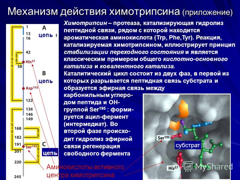 Механизм действия химотрипсина (приложение) цепь Химотрипсин – протеаза, катализирующая гидролиз пептидной связи, рядом с которой находится ароматическая аминокислота (Trp, Phe,Tyr). Реакция, катализируемая химотрипсином, иллюстрирует принцип стабили