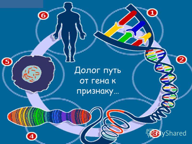 1- хп ячмень (ПК) 2- митох ячмень (КМ) 3- хп ячмень (СвЦ) 4 - хп ячмень (СвЦ) 5 –мт ячмень (ЗГ) 6- хп подсолнечник (ПГ) Долог путь от гена к признаку…