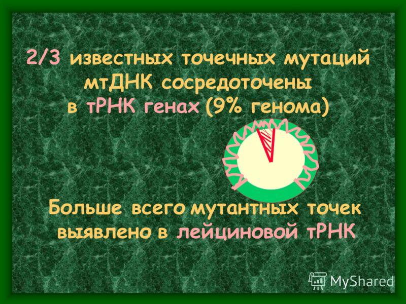 2/3 известных точечных мутаций мтДНК сосредоточены в тРНК генах (9% генома) Больше всего мутантных точек выявлено в лейциновой тРНК