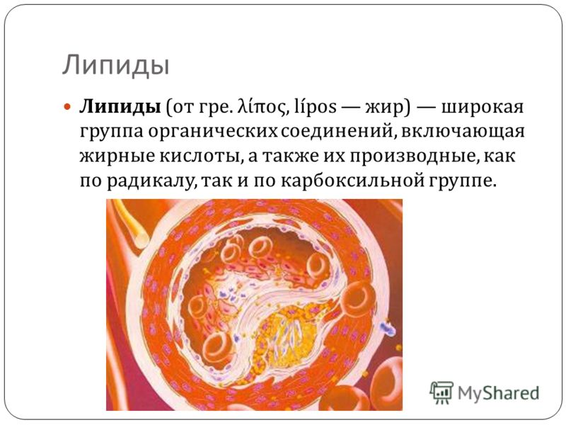 Липиды Липиды ( от гре. λίπος, lípos жир ) широкая группа органических соединений, включающая жирные кислоты, а также их производные, как по радикалу, так и по карбоксильной группе.