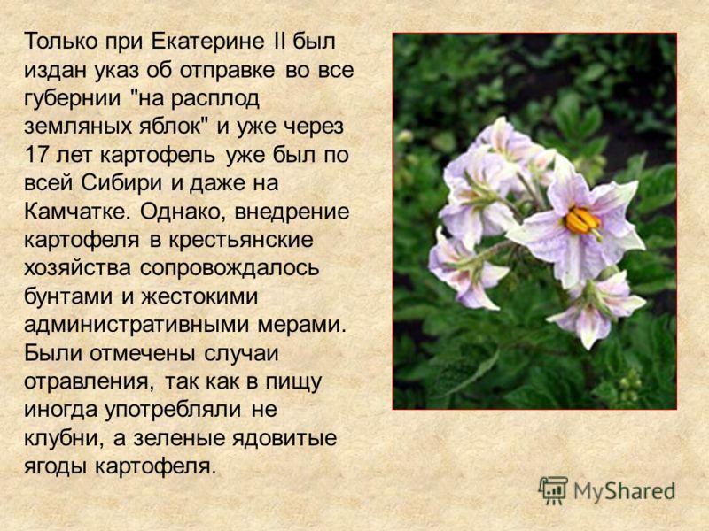 Только при Екатерине II был издан указ об отправке во все губернии