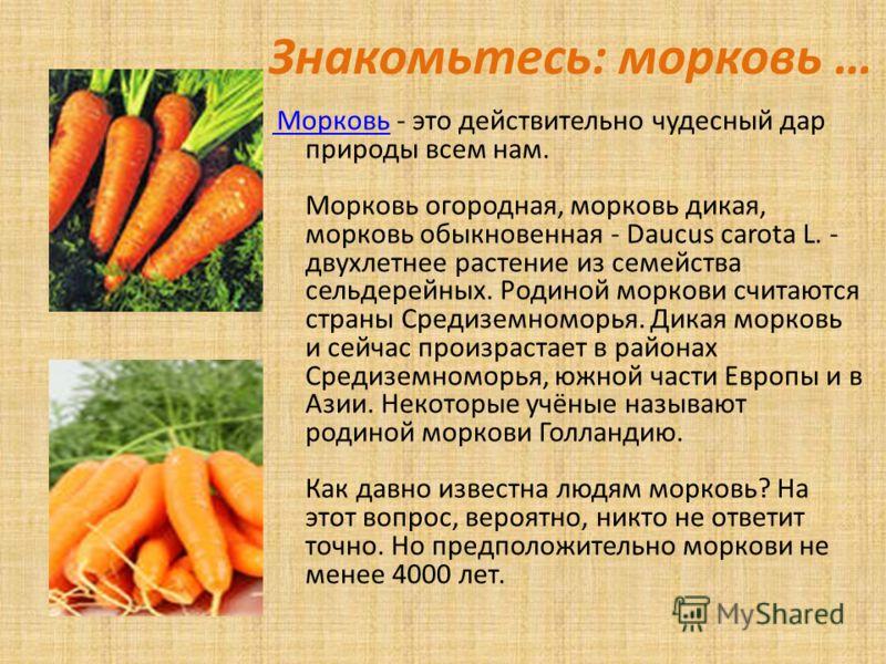Знакомьтесь: морковь … Морковь Морковь - это действительно чудесный дар природы всем нам. Морковь огородная, морковь дикая, морковь обыкновенная - Daucus carota L. - двухлетнее растение из семейства сельдерейных. Родиной моркови считаются страны Сред