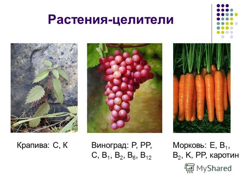Растения-целители Крапива: С, КВиноград: P, PP, C, B 1, B 2, B 6, B 12 Морковь: Е, B 1, B 2, K, PP, каротин