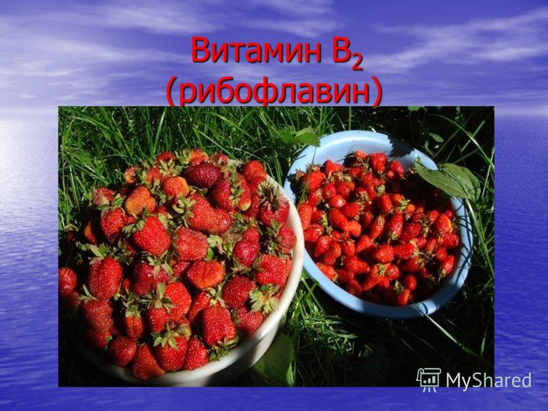 Витамин В 2 (рибофлавин) Витамин В 2 (рибофлавин)