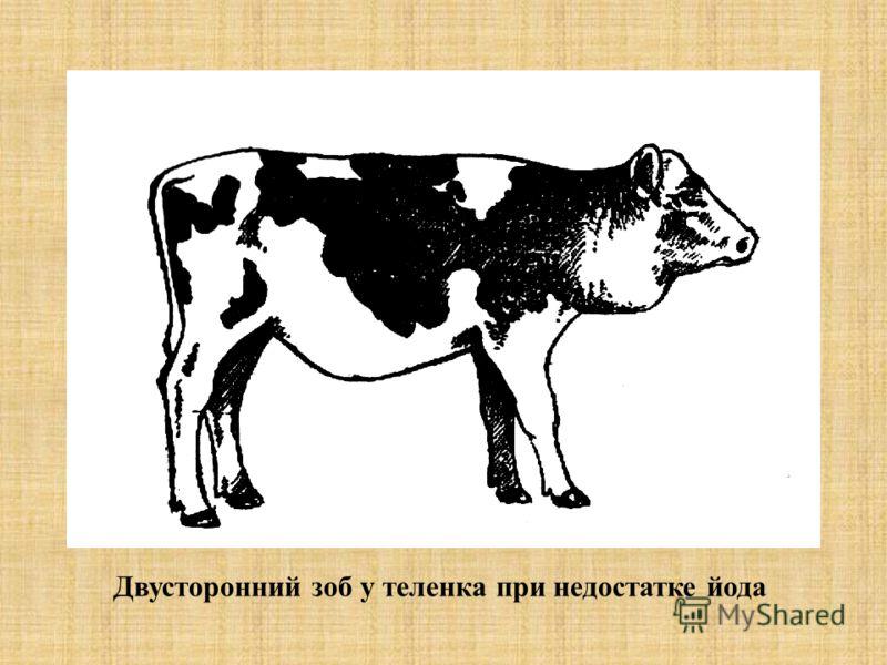 Двусторонний зоб у теленка при недостатке йода