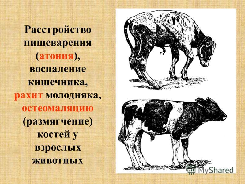Расстройство пищеварения (атония), воспаление кишечника, рахит молодняка, остеомаляцию (размягчение) костей у взрослых животных