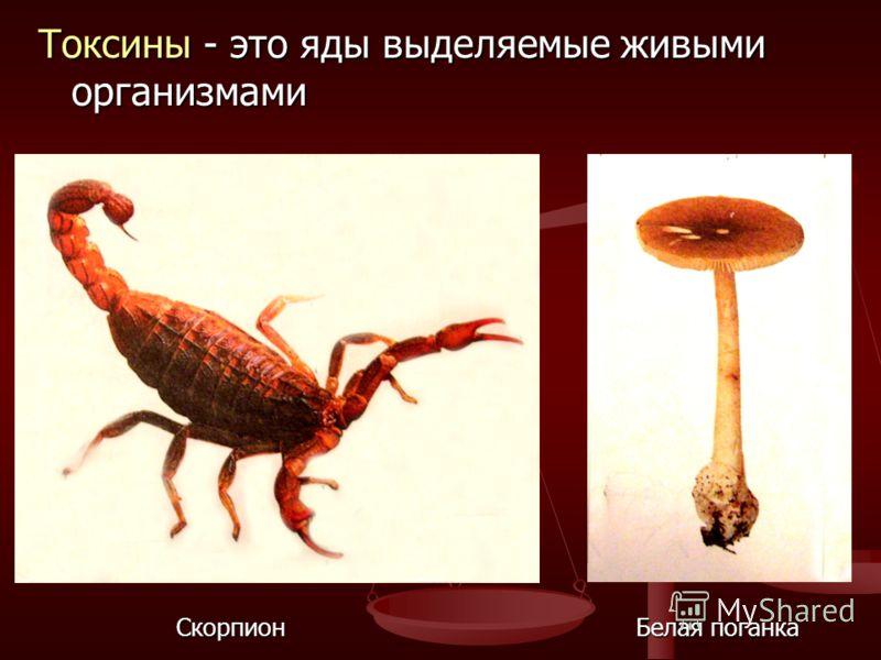 Токсины - это яды выделяемые живыми организмами Скорпион Белая поганка Скорпион Белая поганка