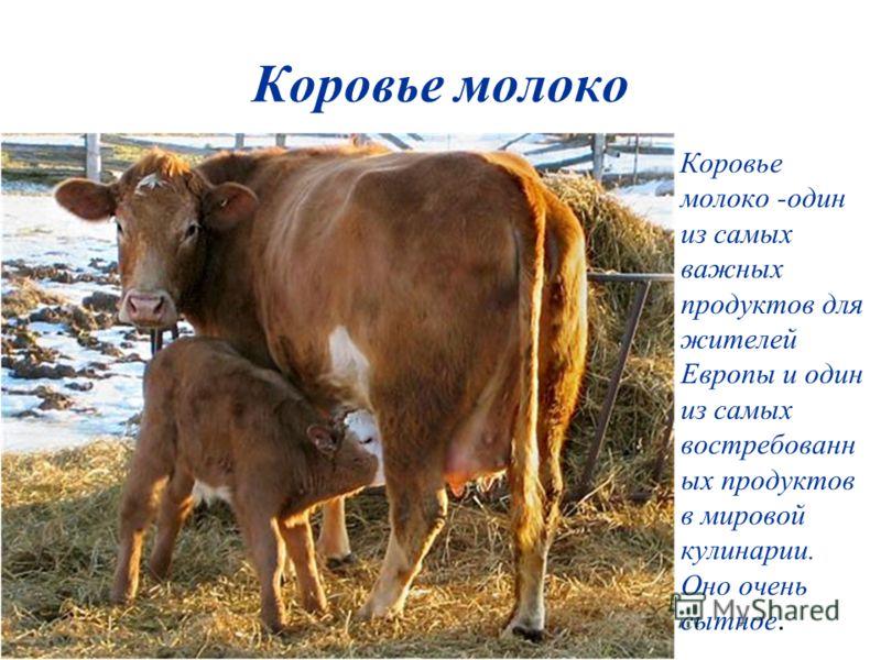 Коровье молоко Коровье молоко -один из самых важных продуктов для жителей Европы и один из самых востребованн ых продуктов в мировой кулинарии. Оно очень сытное.