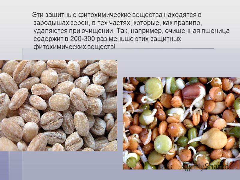 Эти защитные фитохимические вещества находятся в зародышах зерен, в тех частях, которые, как правило, удаляются при очищении. Так, например, очищенная пшеница содержит в 200-300 раз меньше этих защитных фитохимических веществ!