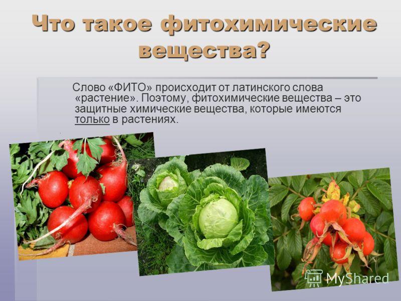Что такое фитохимические вещества? Слово «ФИТО» происходит от латинского слова «растение». Поэтому, фитохимические вещества – это защитные химические вещества, которые имеются только в растениях..