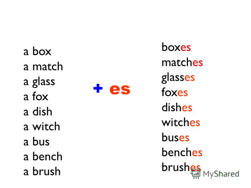 a box a match a glass a fox a dish a witch a bus a bench a brush boxes matches glasses foxes dishes witches buses benches brushes + es