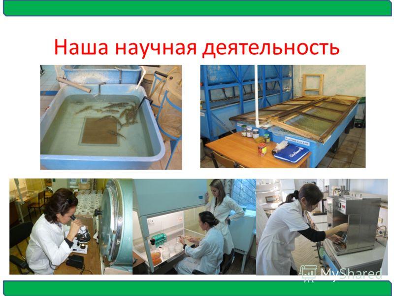 Наша научная деятельность