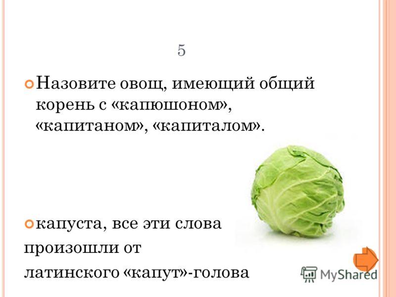 5 Назовите овощ, имеющий общий корень с «капюшоном», «капитаном», «капиталом». капуста, все эти слова произошли от латинского «капут»-голова