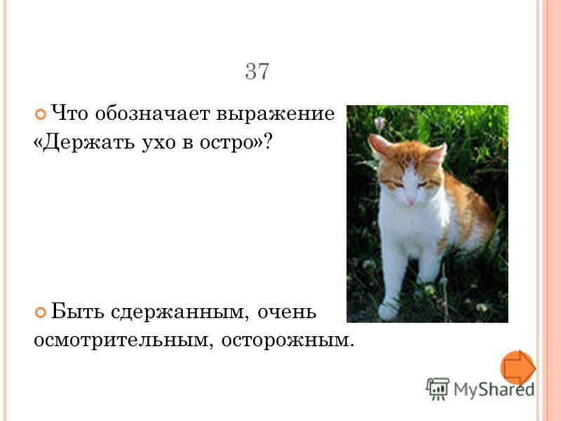 37 Что обозначает выражение «Держать ухо в остро»? Быть сдержанным, очень осмотрительным, осторожным.