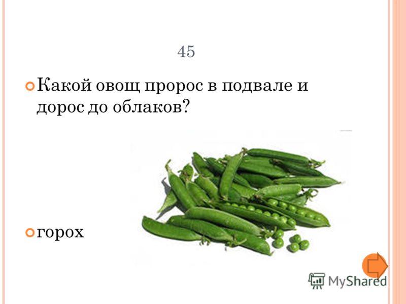 45 Какой овощ пророс в подвале и дорос до облаков? горох