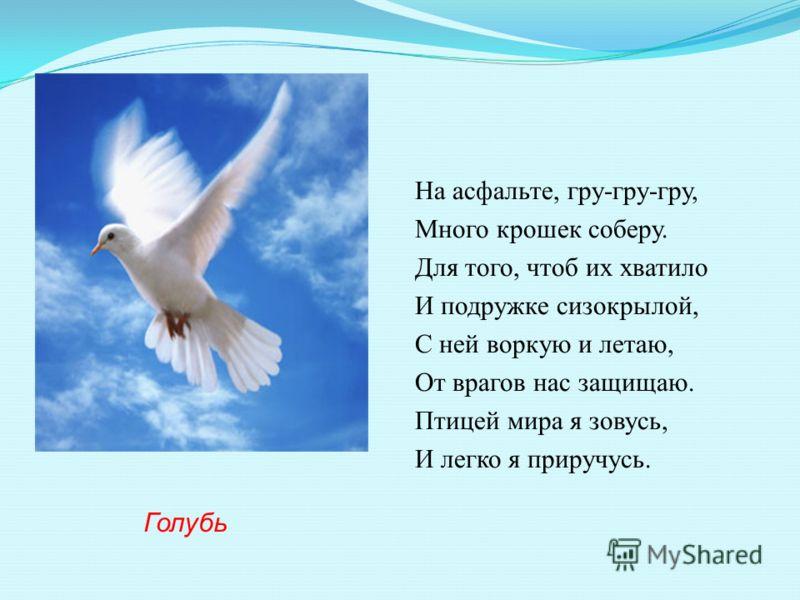 На асфальте, гру-гру-гру, Много крошек соберу. Для того, чтоб их хватило И подружке сизокрылой, С ней воркую и летаю, От врагов нас защищаю. Птицей мира я зовусь, И легко я приручусь. Голубь