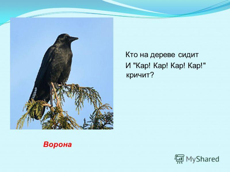 Кто на дереве сидит И Кар! Кар! Кар! Кар! кричит? Ворона
