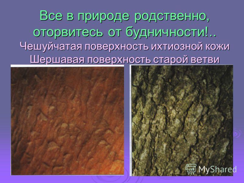 Все в природе родственно, оторвитесь от будничности!.. Чешуйчатая поверхность ихтиозной кожи Шершавая поверхность старой ветви
